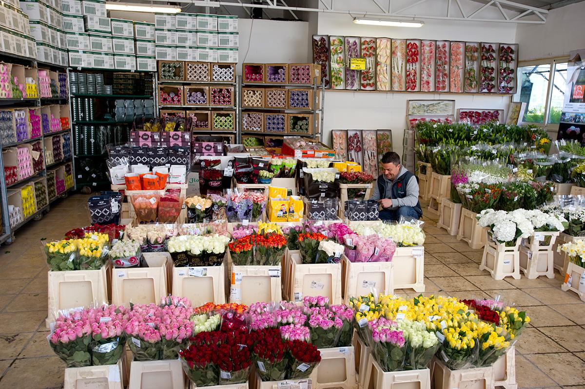 Ingrosso Fiori.Flora Olanda Flora Olanda Ingrosso Piante Fiori E Non Solo